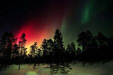 PHOTO LANDSCAPE FOREST AURORA NORTHERN LIGHTS LARGE WALL ART PRINT POSTER LF2675