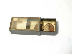 19thC Collectors Cabinet Specimen Natural History HALF SEED in Glass Box  #5471