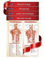 Chiropractic Medicine - 4 Chart Quick Reference Guide Bundle