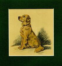 GOLDEN RETRIEVER HEAD STUDIES NAMED CHAMPION DOGS OLD 1934 ORIGINAL DOG PRINT
