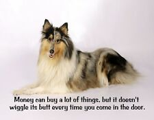METAL REFRIGERATOR MAGNET Money Buys Lot Doesn't Wiggle Butt Dog Collie Humor