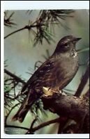 Mating Bee-eater Wackelkarte Lentikular Bienenfresser-Balz