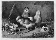 CHICKEN FIRST THOUGHT HATCHING EGG BROOD COUNTRY LIFE ANTIQUE ENGRAVING CHICKEN