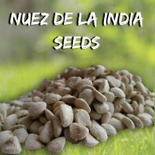 3 Packs (36 Seeds) NUEZ DE LA INDIA - FOR FAST WEIGTH LOSS - 100% NATURAL