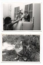 PHOTO ANCIENNE Snapshot Cat Chat Frigo Main Bras Lot 2 photos Vers 1970