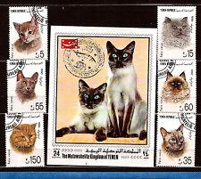 YEMEN Les diverses races de chat C79