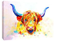 Caja de color Highland vaca impresión de LONA pared arte Foto-todos los tamaños disponibles