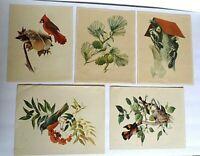Vintage Prints by Betty Carnes & FRANCIS LEE JAQUES Series 3 Wild Birds 5 Prints
