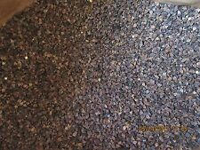 5 LB BAG OF BUCKWHEAT SEED - FRESH SEED - BUCKWHEAT SEED  - FREE SHIPPING