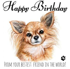 PERSONALISED BIRTHDAY CARD FROM THE DOG - LONG HAIRED CHIWAWA PET BEST FRIEND