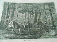 Gravure 1861 - Combat de Cerfs d'après G. Courbet