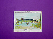POISSONS BROCHET  CHROMO CHOCOLAT PUPIER JOLIES IMAGES 1930