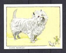 1934 Uk Dog Art Full Body Gallaher Cigarette Large Trade Card Cairn Terrier