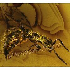 Bernstein Inkluse Inklusen Einschluss Insekt ErzwespeChalcidoidea IN271
