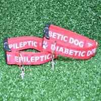 Medical Alert Diabetic Epileptic Seizures Dog Collar **EXCLUSIVE**