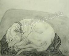 White Pit Bull Dog Sleeping Sketch Art Drawing Print always next Faithful loyal