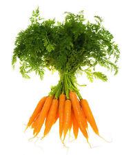 400Pcs Carrot Organic Heirloom Daucus Seeds Vegetables Fruit Home Garden BT120