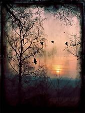 PHOTO PAINTING DF GOTHIC FOREST CROWS 18X24 '' POSTER ART PRINT BDAY GIFT LF078
