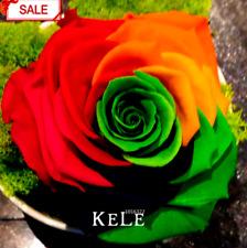 50 Pcs Seeds Rainbow Rose Bonsai Home Garden Colorful Flowers Plants New 2020 D
