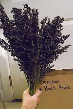 Black Amber Sorghum - 30 Seeds MAKE YOUR OWN SYRUP- CHICKENS LOVE THE SEEDS!