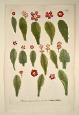 J. W. Weinmann 1739 Primula veris Variorum St. Peters-claves lconographia
