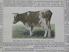 The Cultivator & Country Gentleman, in-text illustration #18 Guernsey Cow