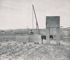 VERS PENICHE c. 1930 - Puit Paysan Âne Portugal - Div 7142