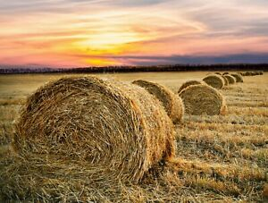 STUNNING COUNTRYSIDE HAY BALES CANVAS PICTURE POSTER PRINT UNFRAMED 6404