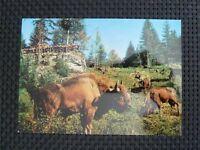 BISON WISENT BUFFALO alte Ansichtskarte / old picture postcard c2356
