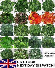 6.23-7.87ft Artificial Trailing Ivy Vine Leaf Garland Plants Foliage Flowers Dec
