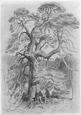 DEER HUNTERS REST UNDER BIG BRANCHY FIR TREE ~ 1877 LANDSEER Art Print Etching
