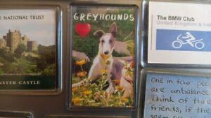 Greyhound Fridge Magnet. Love Greyhounds. Daisy the Greyhound.