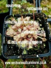 Sarracenia Seed Purpurea x Purpurea 0.5 gram