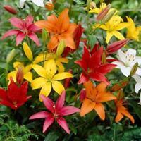 100Pcs Lily Flower Seeds 25 Kinds Lílium Beautiful Bonsai Plants Colorful Garden