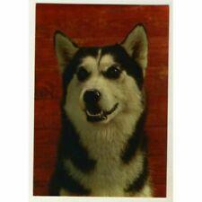 Polarhund * Schlittenhund * Husky * Malamute *  Dog  * PK  * Postcard * RARE
