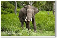 Indian Bull Elephant - NEW Animal Wildlife POSTER