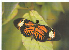 Animal Postcard - Insect - Butterfly - The Postman - Heliconius Melpomone AB1835