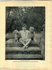 1930 Book Plate Print Horlick Bedlington Kennel Lewis Cruft Show Terrier