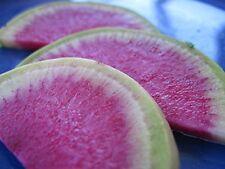 Radish Watermelon Great Heirloom Vegetable By Seed Kingdom BULK 1 Lb Seeds