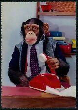 CEO telephone Dressed Circus Chimpanzee Monkey Fantasy original 1950s postcard