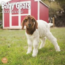 2022 Baby Goats Wall Calendar By Bright Day 12 X 12 Inch