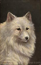 Dogs A. Miller White Fluffy Dog Antique Postcard Vintage Post Card