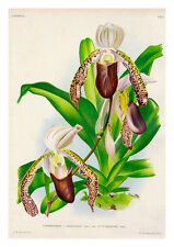 Cyfripedium Morganiae Burfordiense by Jean Linden Orchids A4 Art Print
