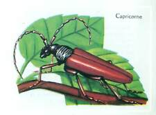CAPRICORNE COLEOPTERE LONGITEUR XYLOPHAGE CAPRICORNE Insect image card 1963