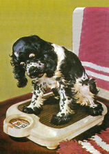 COCKER SPANIEL ON WEIGHING SCALES CHARMING COMIC DOG GREETINGS NOTE CARD