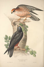 Gould 's Birds of Europe Complete 5 volumes 448 colour plates on 1 DVD