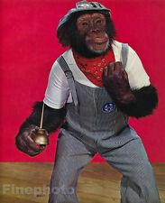1959 Vintage MONKEY HUMOR ~ Chimpanzee RAILROAD Train Conductor Animal Photo Art