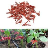 50pcs Gardening Grafting Clips For Garden Vegetable Flower Vine Bushes Plants