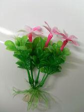 plante fleur rose