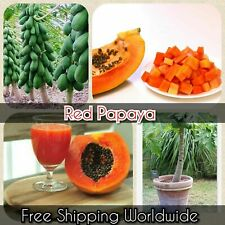50+ Papaya Fruit Seeds Rare Kind Sweet Tropical Edible Bonsai Plants in Garden
